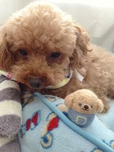 羊毛フェルト dog