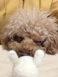 コパン 寝てる