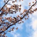 春の香り*
